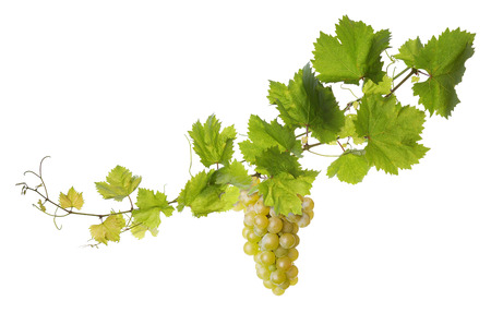 Collage of vine leaves and grape