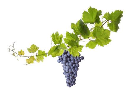 Collage de feuilles de vigne et de raisin bleu