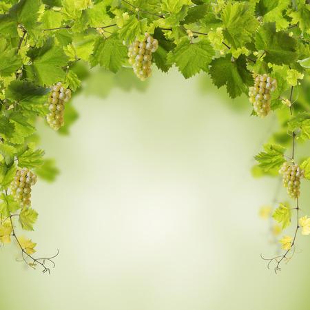 Collage de hojas de vid y uvas amarillas