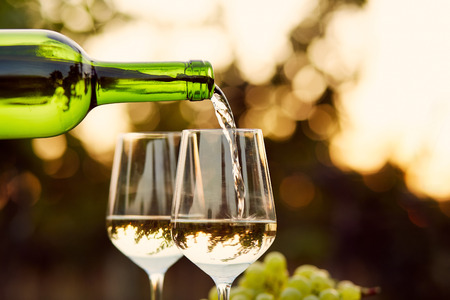 Pouring white wine into glasses in the vineyard, toned Stockfoto