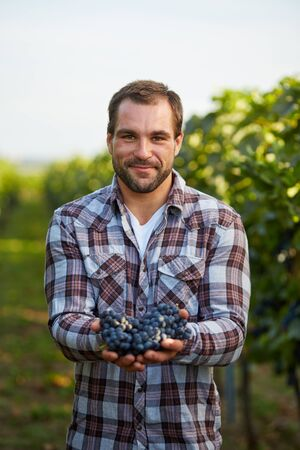 vi�edo: Farmer holding reci�n cosechadas uvas azules en la vi�a