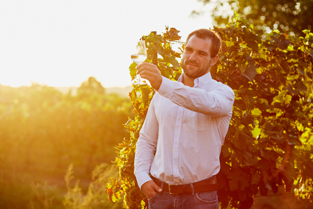 winemaker: Winemaker tasting white wine in vineyard at sunset. Toned Stock Photo