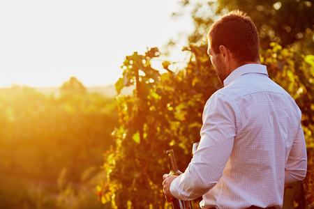 wineries: Man with a bottle of red wine in hand, at sunset in the vineyard. Toned