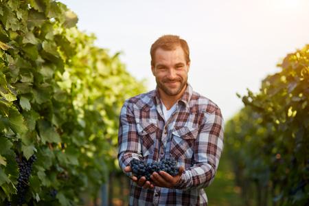 Recién cosechadas uvas de color azul en las manos de los agricultores, tonos