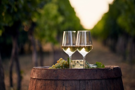 Two glasses of white wine on the old wooden barrel outdoors. Sunset in the vineyard.