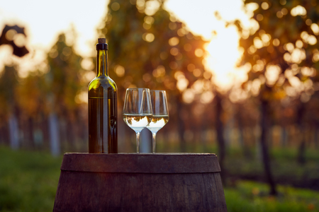 White wine in two glasses on a wooden barrel at sunset. Wine tasting outside in the vineyard. Archivio Fotografico
