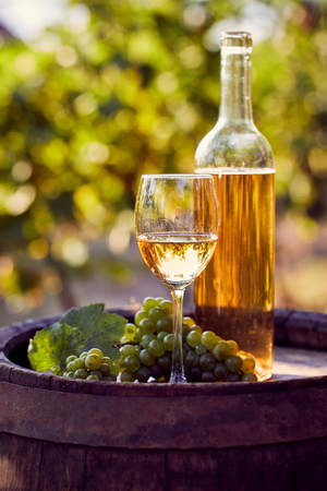 The glass of white wine on a wooden barrel in the vineyard