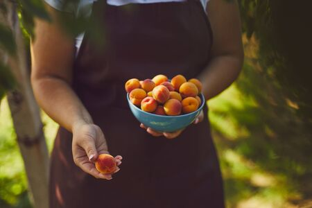 Woman with full bowl of ripe apricots, farmer at harvest