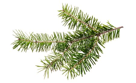 Fir tree branch isolated on white background Imagens