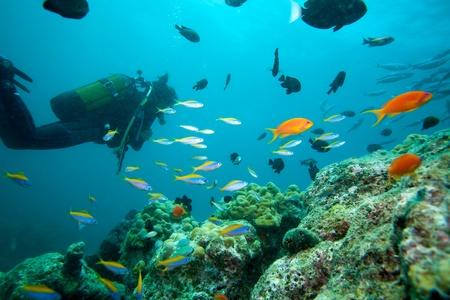 Multicolor life of reef, Ari-Atoll. Maldives Stock Photo - 10297419