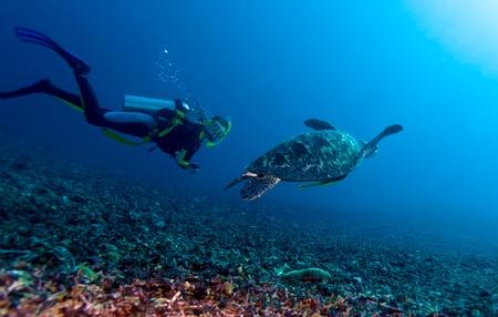nurkować: Basen Green Turtle (Chelonia mydas) i nurek, Gili Meno, Lombok, Indonezja