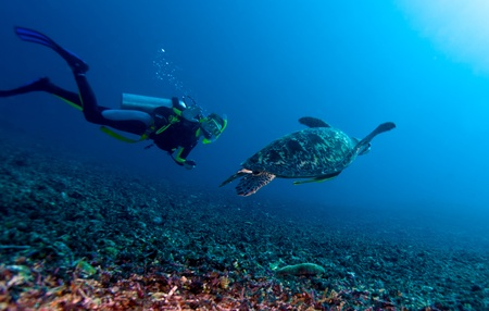underwater diving: Swimming green turtle (Chelonia mydas) and diver, Gili meno, Lombok, Indonesia