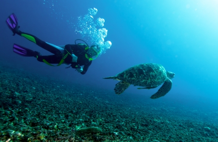 Swimming green turtle (Chelonia mydas) and diver, Gili meno, Lombok, Indonesia photo