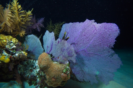 Coral reef during night dive, Cayo Largo, Cuba Stock Photo