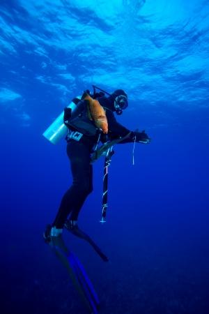 speargun: Spear fisherman with speargun
