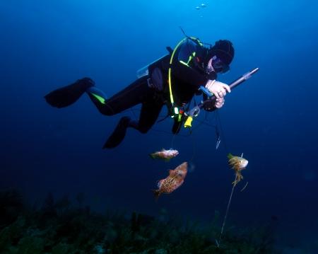 aqualung: Pescatore lancia con fucile