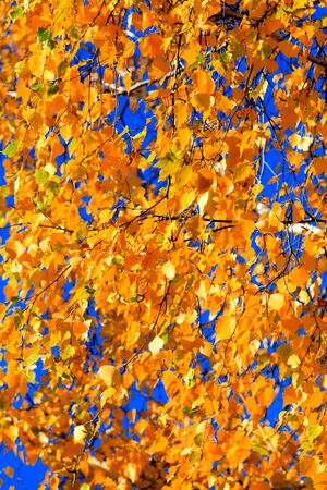 Autumn gold leaves background photo