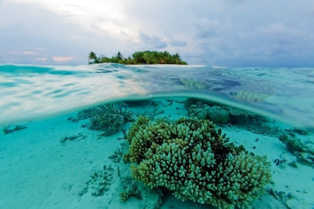 Semi Underwater Scene of tropical Island and Reef with small fishes, Maldives photo