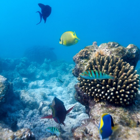 Fishes and Sea Bottom of Ecosystem of Tropical Coral Reef, Maldives photo