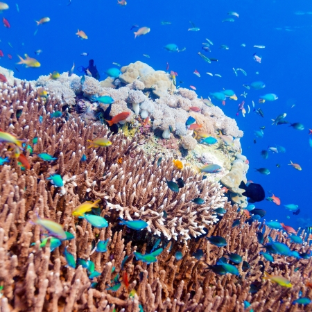 reefs: Underwater Landscape with  Hundreds of Fishes near Tropical Coral Reef, Bali, Indonesia Stock Photo