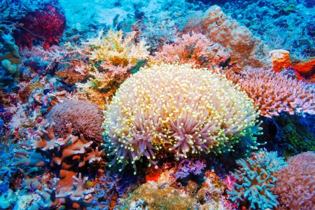 Colorful Tropical Reef Landscape with Soft Corals, bali, Indonesia Stock Photo