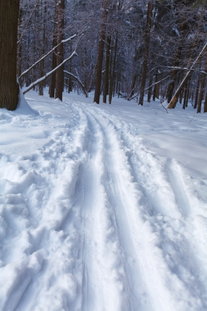crosscountry: Crosscountry Forest Ski Road