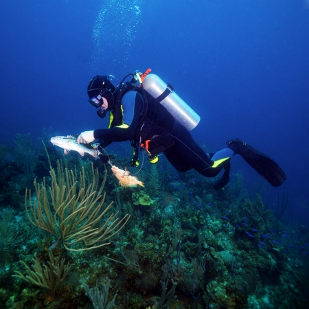 Scuba Diver Hunting Fishes with Spear Gun photo