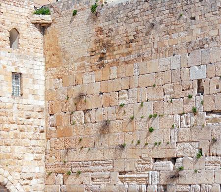 hasid: Western Wall of Temple, Jerusalem, Israel Stock Photo