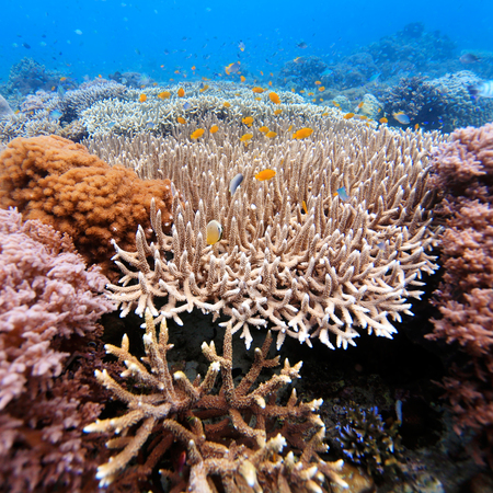 Underwater Landscape with  Hundreds of Fishes near Tropical Coral Reef, Bali, Indonesia photo