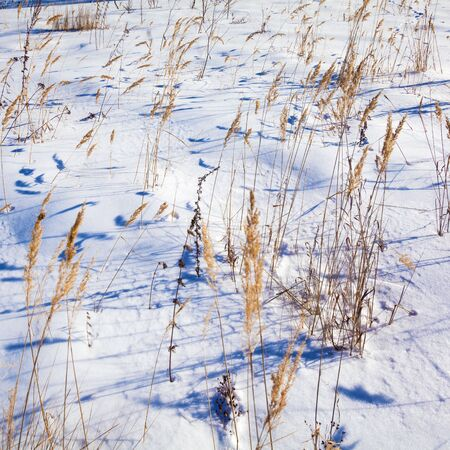 Dry Grass with Snowy Background Nature Landscape