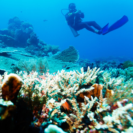 underwater ocean: Silhouette of Scuba Diver near Sea Bottom with Copyspace Stock Photo