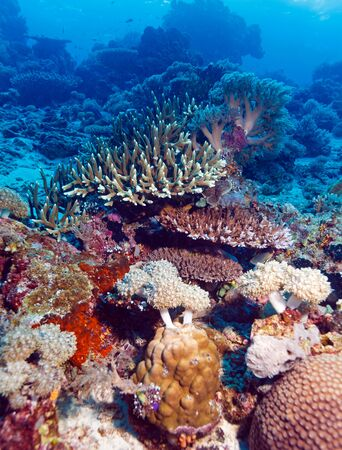 sea bottom: Fishes and Sea Bottom of Ecosystem of Tropical Coral Reef