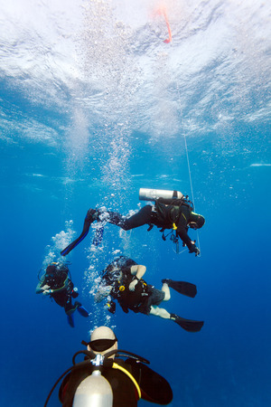 Group of divers on 5-min safety stop, Cuba 版權商用圖片