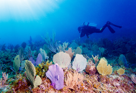 indian ocean: Young Man Scuba Diver between Water Surface and Sea Bottom