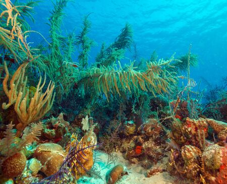 soft corals: Soft Corals near Cayo Largo, Cuba Stock Photo