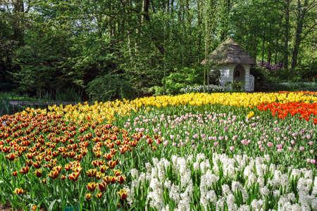 keukenhof: Tulips in Keukenhof flower garden in Lisse, Netherlands