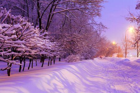 city scene: Illuminated Night Winter City Scene