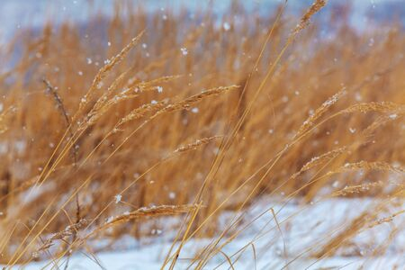 snowy field: Snowfall at Winter Snowy Field Nature Background Stock Photo