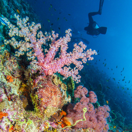 soft corals: Gorgonian soft corals, Maldives Stock Photo
