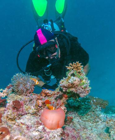 big clown fish: Big Purple Anemone with Clown Fish and Asian Man - Scuba Diver, Maldives