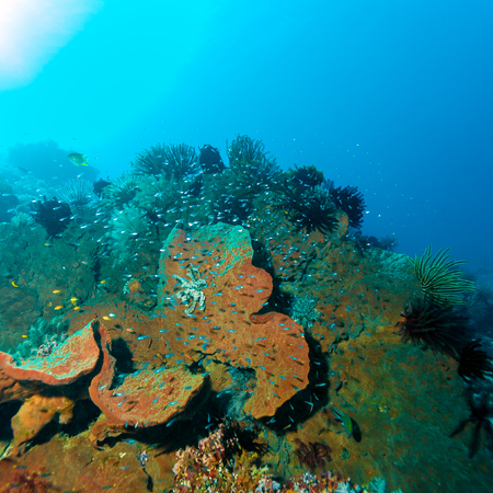 ecosystem: Fishes and Sea Bottom of Ecosystem of Tropical Coral Reef