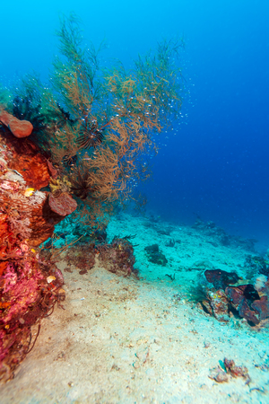 soft corals: Colorful Tropical Reef Landscape with Soft Corals, bali, Indonesia Stock Photo