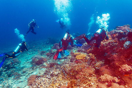 Group of divers going deep, Bali