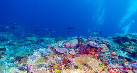 ecosistema: Peces y el mar de fondo del Ecosistema Tropical Coral Reef