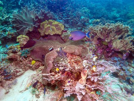 ecosistema: Fishes and Sea Bottom of Ecosystem of Tropical Coral Reef