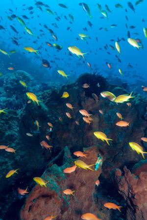 ecosystem: Peces y el mar de fondo del Ecosistema Tropical Coral Reef