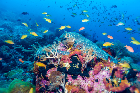 Fishes and Sea Bottom of Ecosystem of Tropical Coral Reef