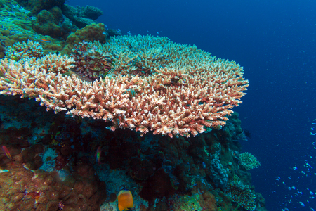 hundreds: Underwater Landscape with Hundreds of Fishes near Tropical Coral Reef, Bali, Indonesia Stock Photo