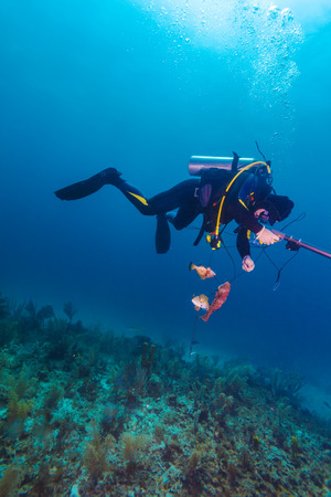 speargun: Scuba diver with speargun and dead fishes under water Stock Photo