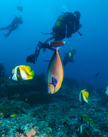 Vlamings unicornfish (Naso vlamingii) on the background of silhouettes of underwater scuba divers, the Maldives